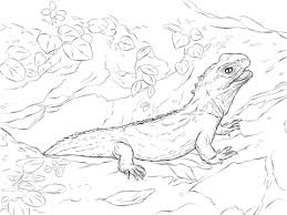 Small Picture Tuatara coloring pages Free Coloring Pages