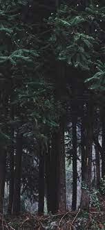 Dark Forest IPhone Wallpaper (61+ best ...