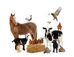 farm animals together.  Animals Throughout Farm Animals Together A