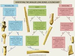 Bone Broke Posts On Archaeology Osteology Biological