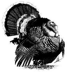 wild turkey clipart black and white.  Black Download This Image As In Wild Turkey Clipart Black And White
