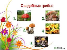 Тесты по природоведению класс школа вида Съедобные грибы 1 2 3 4 5