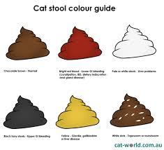 Kitten Diarrhea Color Chart The Scoop On Poop What Your Cats Stool Is Telling You