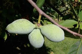 Create Small Fruit Trees With This Pruning Method  Organic Fruit Trees In Michigan