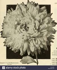 average american flower size exceedingly good stock photos exceedingly good stock images alamy
