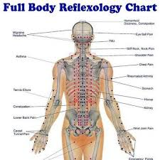 Full Body Reflexology Chart Reflexology Massage