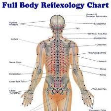 Whole Body Chart Full Body Reflexology Chart Reflexology Massage