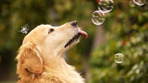 hd pics photos cute dog playing bubbles nature pets hd quality desktop background wallpaper