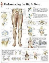 Understanding The Hip Knee Chart Wall Chart
