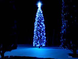 free christmas tree wallpaper. Fine Wallpaper BeautifulChristmasTrees05 Inside Free Christmas Tree Wallpaper H