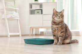 get rid of cat urine smell in house