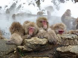 「猿の温泉」の画像検索結果
