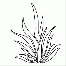 Small Picture Beautiful Grass And Plants Coloring Pages With Plant New Grass