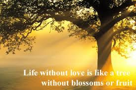 Life Without Love Quotes Life Without Love Quotes Delectable A Life Without Love Desicomments 44