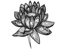 Abstract Art Black And White Patterns Black White Lotus Flower Ink Illustration Abstract