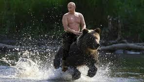 Resultado de imagen para oso ruso