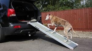Grundsätzlich dürfen hunde treppen laufen. Treppenhilfen Fur Hunde Gibt Es Mehr Ausser Rampen Haustiermagazin