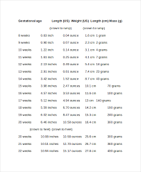 7+ Baby Growth Chart Week By Week Templates - Free Sample, Example ...
