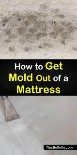 get mold out of a mattress