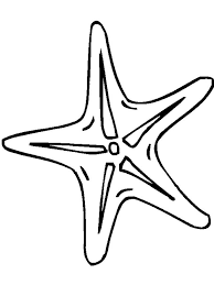 Small Picture Starfish coloring pages Download and print Starfish coloring pages