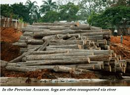Amazon Logging Practice And Policy Global Forest Atlas