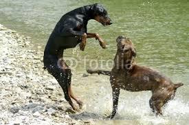 dog fighting essay sample essay on dog fighting blog ultius dog  dog fighting essay