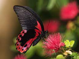 30 COLORFUL BUTTERFLY WALLPAPERS FREE ...