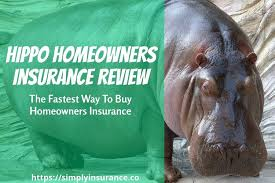 review of hippo insurance