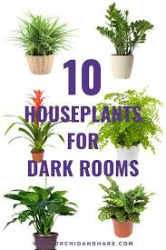 10 low light house plants indoor