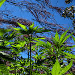 Recreational marijuana stores to open in Massachusetts
