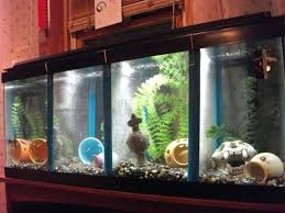 fish tank divider 55 gallon fish tank divider gallon how to divide aquarium tank how to fish tank divider