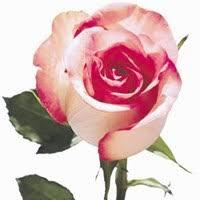 Ivy Crawford Obituary - Milton Keynes, Buckinghamshire | Legacy.com