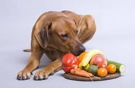 Dog Friendly Fruits And Vegetables Help Em Up