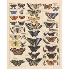 Moth Identification Chart Meishe Art Poster Print Vintage Butterflies Insects Butterfly Breeds Collection Species Identification Reference Chart Pop Classroom Club Home Wall