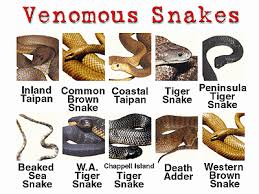 Australian Snake Chart Just Some Really Deadly Snakes Spiders Snakes Snake