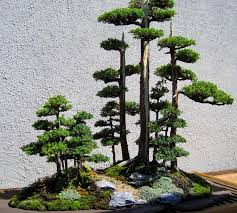 indoor bonsai forest bonsai tree forest bonsai tree interior