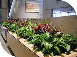 Image Diy Whether You Are Designing Brand New Space Or Livening Up Your Existing Environment Builtin Planter Boxes Offer The Flexibility You Need To Meet Your Sydney Indoor Plant Hire Planter Boxes For Hire Sydney Buildings Hotels Offices