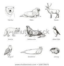 Sketches Animal Vector Set Sketches Animals North Hand Stock Vector Royalty Free