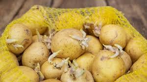 K) ich kann nicht mitspielen. Kartoffeln Mit Trieben Giftig Oder Essbar Vorsicht Ist Angebracht