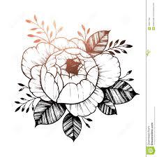 нарисованная рукой иллюстрация вектора цветок пиона флористическое