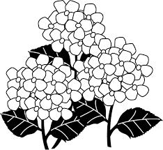 50歳以上 6月の花イラスト無料 子供と大人のための無料印刷可能な