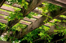 High Achievers Trellises And Pots For Indoor Vines And Climbers Wall Climbing Plants In Pots