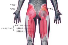 「お尻の筋肉 フリーイラスト」の画像検索結果