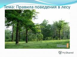 Презентация на тему Тема Правила поведения в лесу Цель  1 Тема Правила поведения в лесу