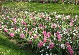 quick tips for planting spring flowering bulbs