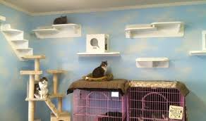 cat shelves for walls extremely creative cat shelves for walls fresh decoration the vertical pictures your