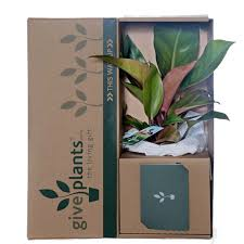 office pot plants. Philodendron Office Pot Plants