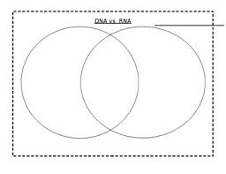 Venn Diagram Comparing Dna And Rna Compare And Contrast Rna Dna