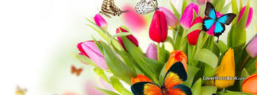 spring flowers colorful erflies free facebook timeline profile cover s