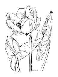 Coloriages Mandala Fleur De Lotus Adultes